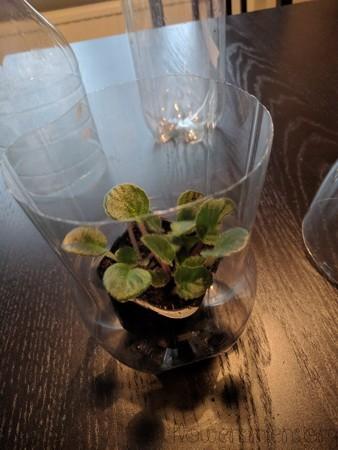 Planta i egen kruka